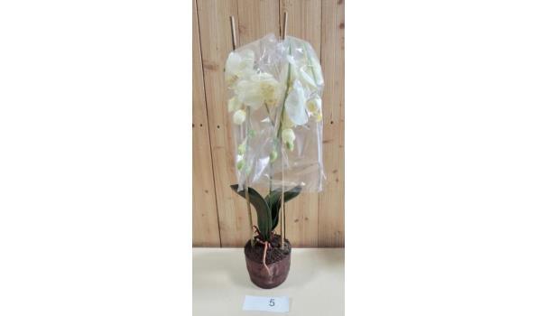 Kunst Orchidee