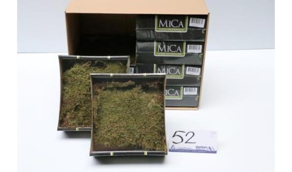 doos inh 8 bakjes met decoratieve mosplantjes